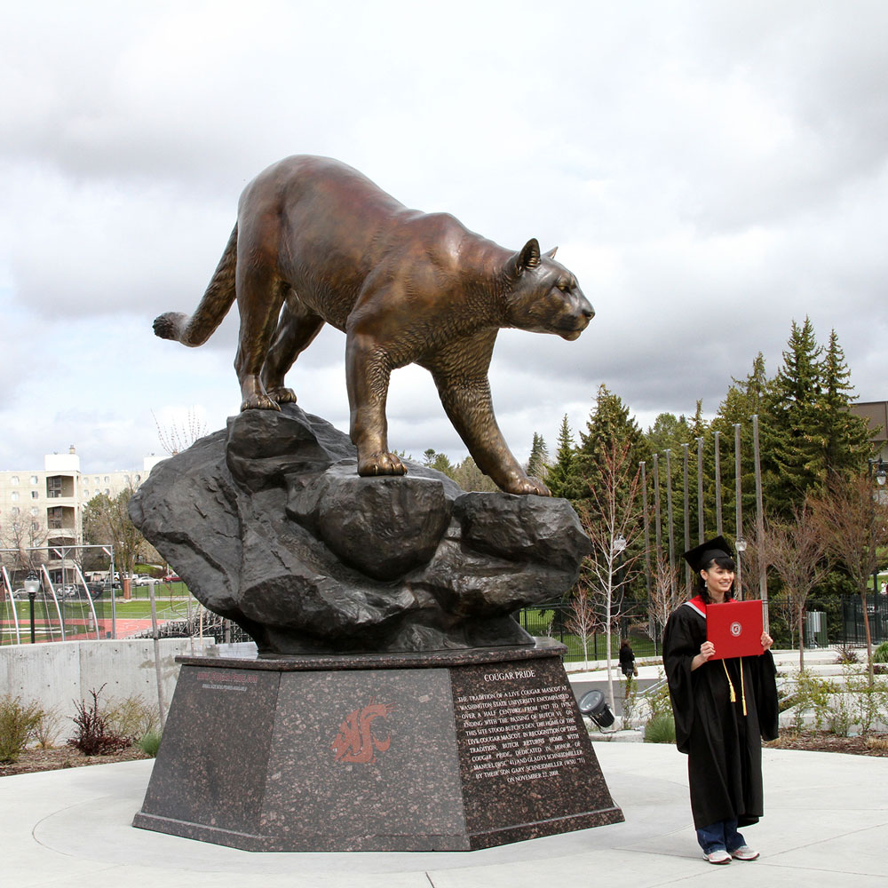 WSU Graduation Washington State University Mascot Cougar Sculpture 13