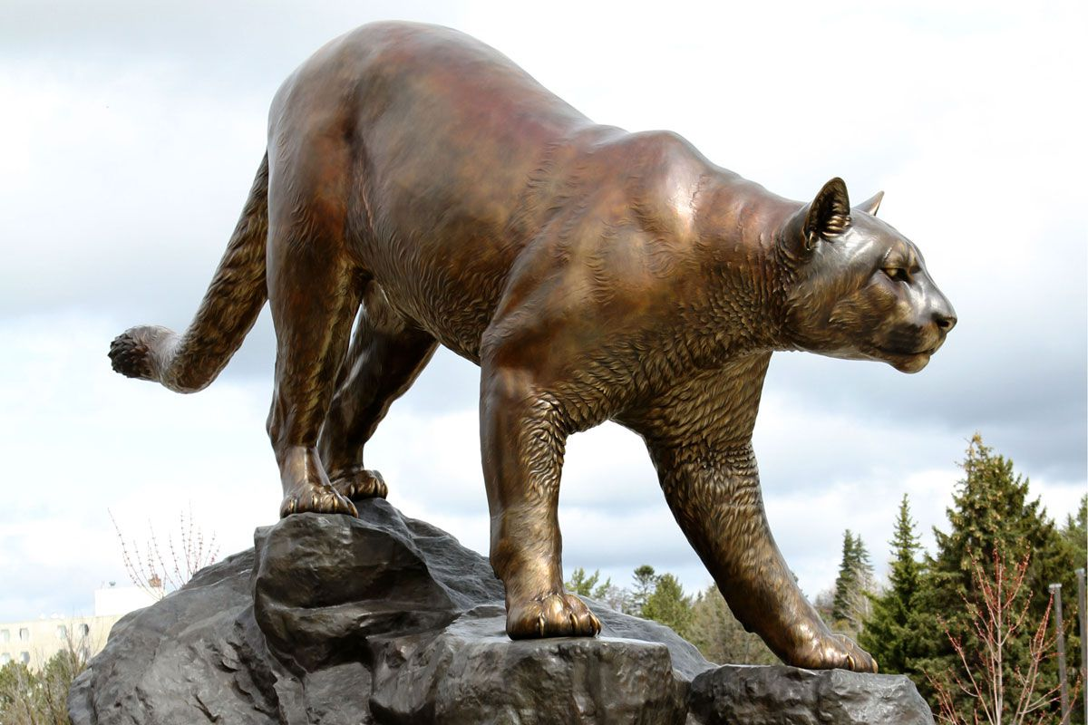 WSU Mascot Washington State University Cougar Sculpture 6